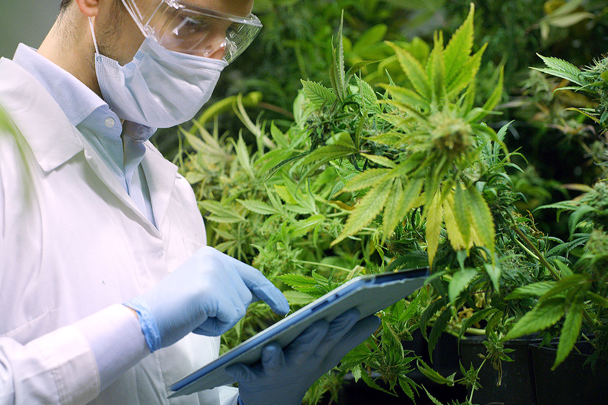 Cannabis Cultivation – Focus on Facilities and Equipment